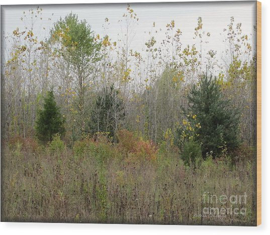 Loss Wood Print by Kathie Chicoine