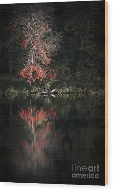 Lost In The Autumn Of Eternity Wood Print