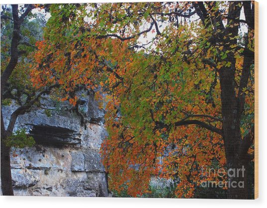 Fall Foliage At Lost Maples State Natural Area  Wood Print