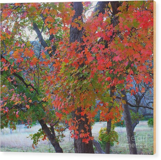 Lost Maples Fall Foliage Wood Print