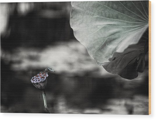 Lotus And Dragonfly 2 Wood Print