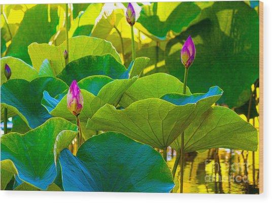 Lotus Garden Wood Print