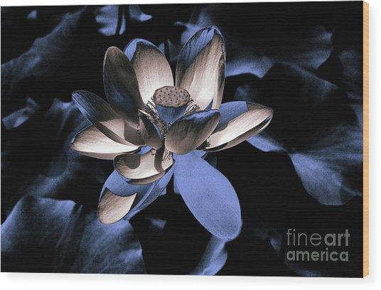 Lotus By Night Wood Print