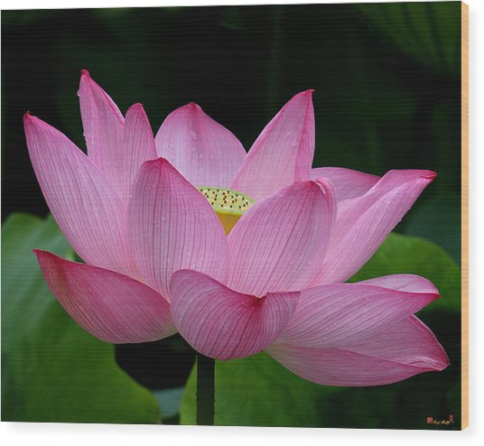 Lotus-center Of Being IIi Dl033 Wood Print