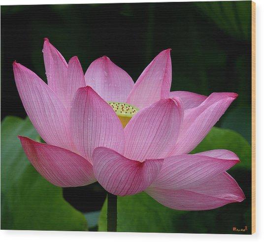 Lotus-center Of Being IIi Dl033 Wood Print