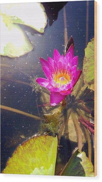 Lotus Day Wood Print