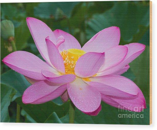 Lotus Dew Wood Print