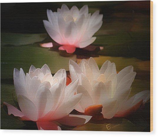 Lotus Flower 6 Wood Print by Ernestine Manowarda