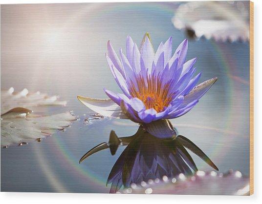 Lotus Flower With Sun Flare Wood Print