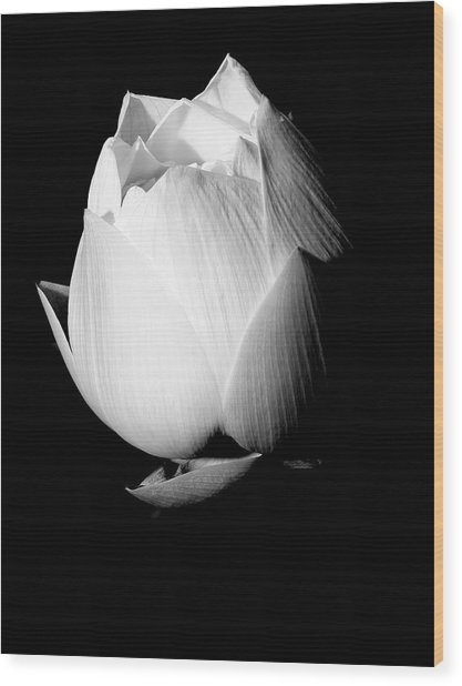 Lotus In Black And White Wood Print