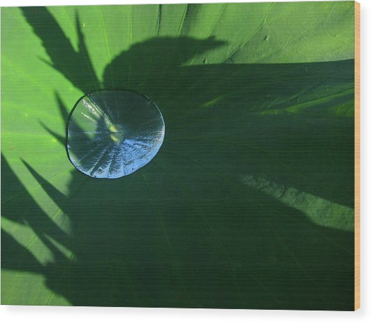 Lotus Leaf With Dew   Wood Print