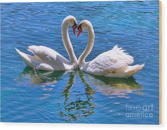 Love For Lauren On Lake Eola By Diana Sainz Wood Print