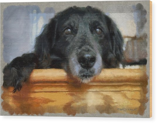 Love In A Puppy's Eyes Wood Print