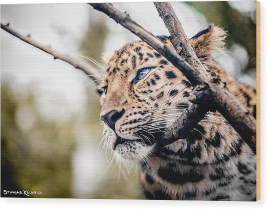 Wood Print featuring the photograph Love Panther Iv by Stwayne Keubrick