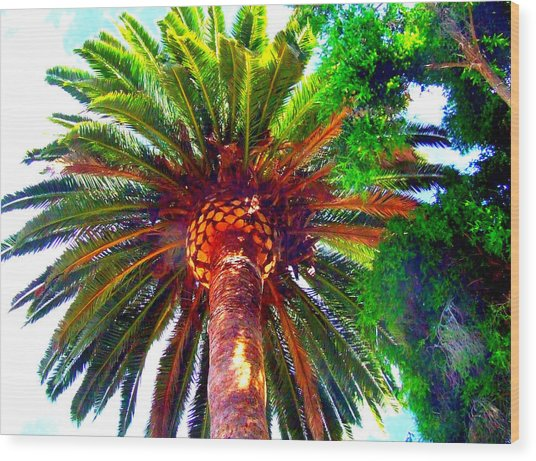 Love Under The Palm In San Diego Wood Print