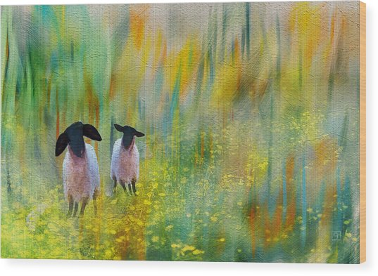 Lovely Day Sheep Wood Print