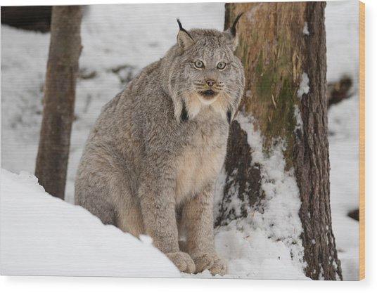 Lovely Lynx Wood Print