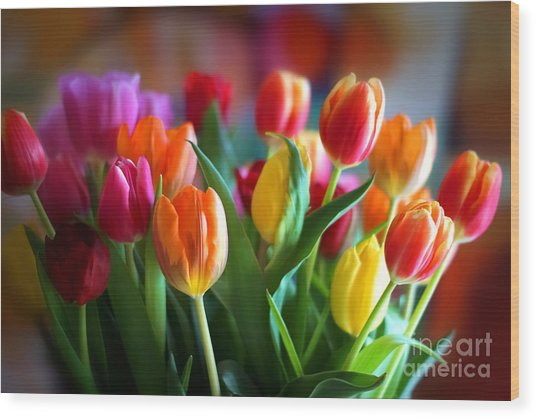 Lovely Tulips Wood Print