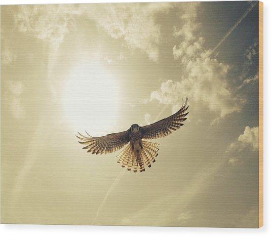 Low Angle View Of Eagle Flying Wood Print by David Hernandez / Eyeem