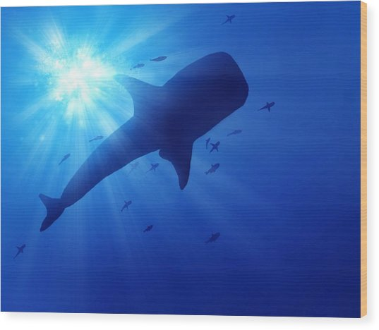 Low Angle View Of Whale Swimming In Sea Wood Print by Stijn Dijkstra / Eyeem
