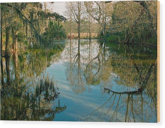 Low Country Swamp Wood Print