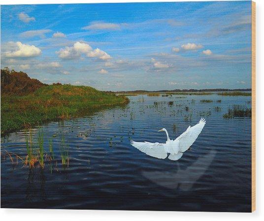 Low Flying Bird Wood Print by Fred Leavitt