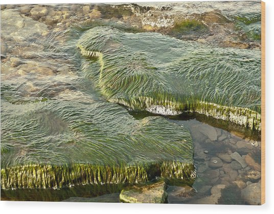Low Water Algae Wood Print