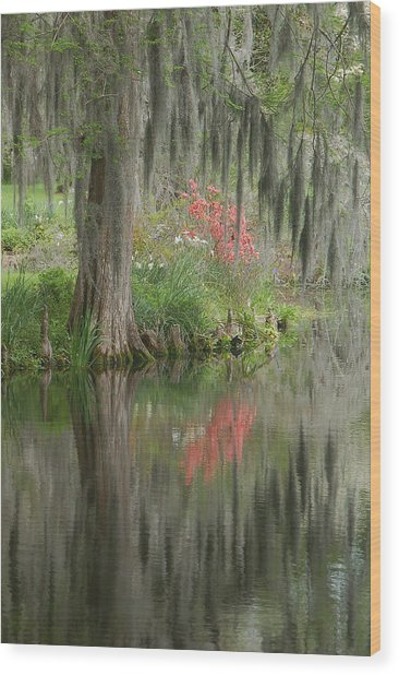 Lowcountry Series I Wood Print