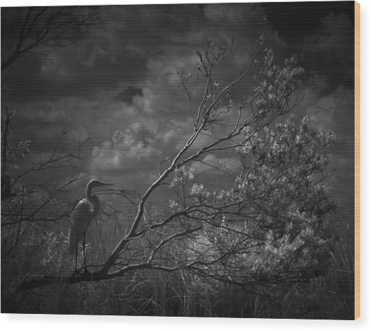 Loxahatchee Heron At Sunset Wood Print