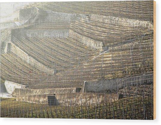Luminous Lavaux Vineyards  Wood Print