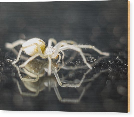 Luminous Spider Wood Print by Carl Engman