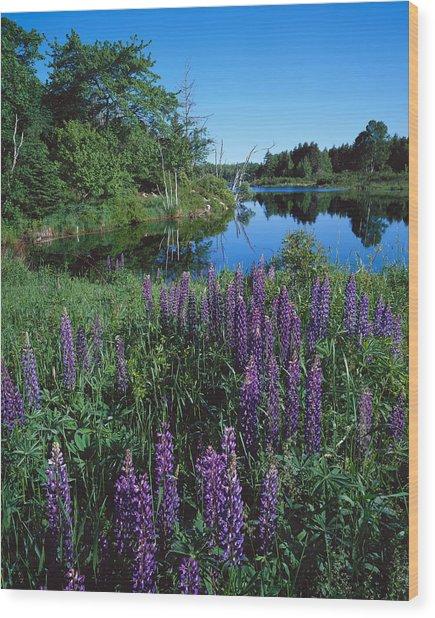 Lupin And Lake-v Wood Print