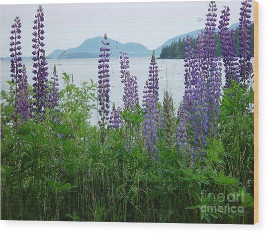 Lupine At Sorrento Wood Print