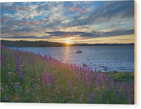 Lupine Sunset On Long Lake Wood Print