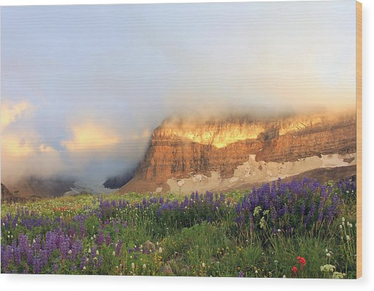 Lupine Wildflowers On Mount Timpanogos Wood Print