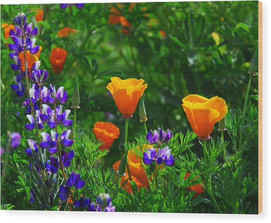 Lupines And Poppies Wood Print