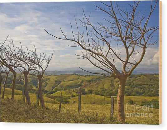 Lush Land Leafless Trees 2 Wood Print