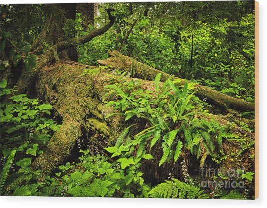 Lush Temperate Rainforest Wood Print