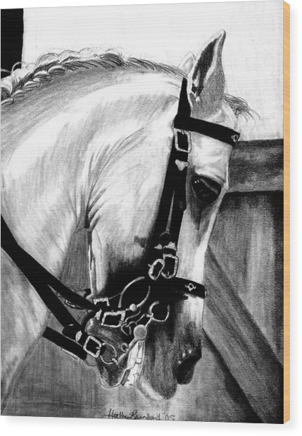 Lusitano Horse Portrait Wood Print by Olde Time  Mercantile