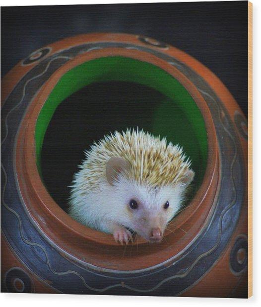 Lyla The Hedgehog Wood Print