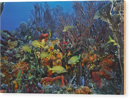 Lynns Reef On A Perfect Day Wood Print