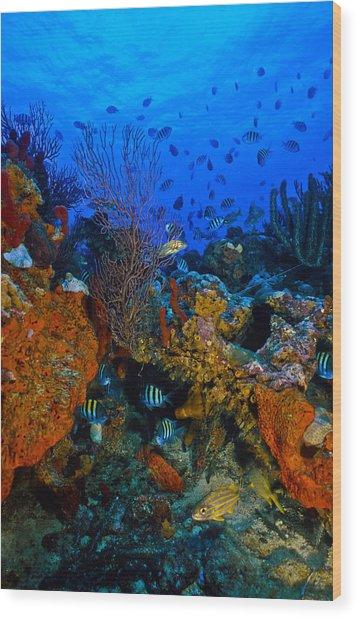Lynns Reef Wood Print