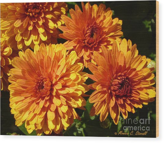 M Bright Orange Flowers Collection No. Bof4 Wood Print