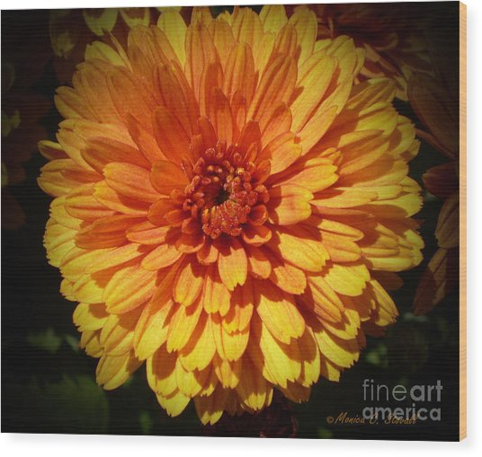 M Bright Orange Flowers Collection No. Bof8 Wood Print