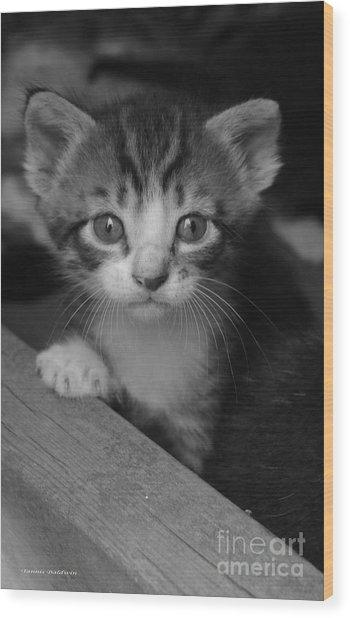 M Kitten Wood Print
