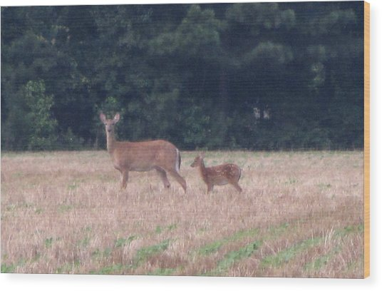 Mable The Female Deer With Harriet The Baby Fawn Wood Print by Debbie Nester