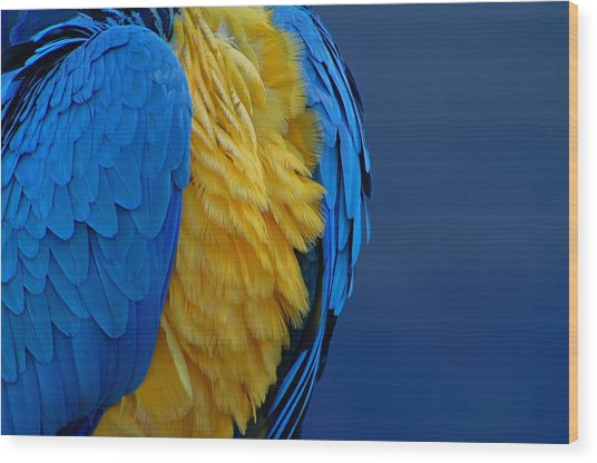 Macaw Blue Yellow Blue Wood Print by Colleen Renshaw