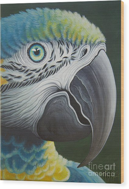 Macaw Head Wood Print