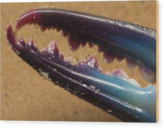 Macro Crab Claw Wood Print