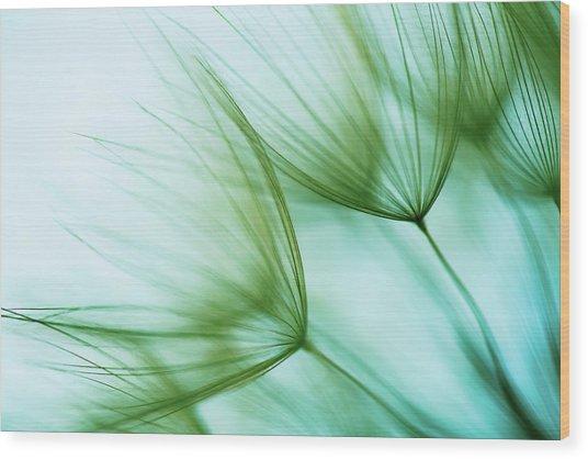 Macro Dandelion Seed Wood Print by Jasmina007